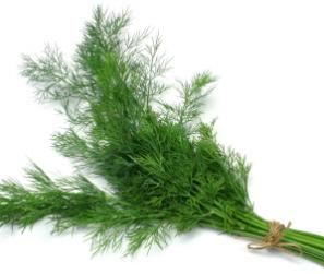 dill-1